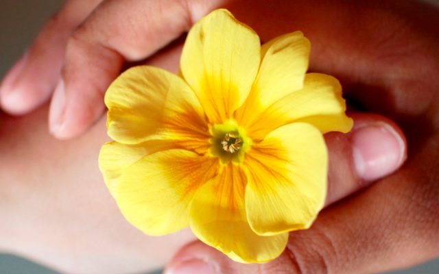 Terapia Para Casais: Metamorfose da Afetividade